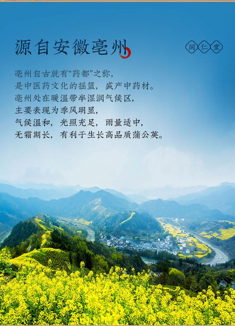 同仁堂 蒲公英根茶 148g (4g*37小袋) 2
